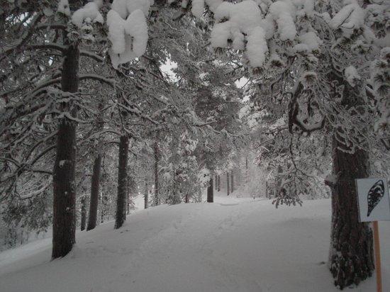 Lapland Hotel Hetta: Paysage proche de l'hôtel