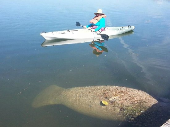Reef Resort: How often do you get to kayak with a manatee?