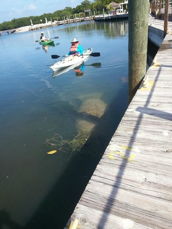 Reef Resort : Excellent bay to kayak, never know what you will find!