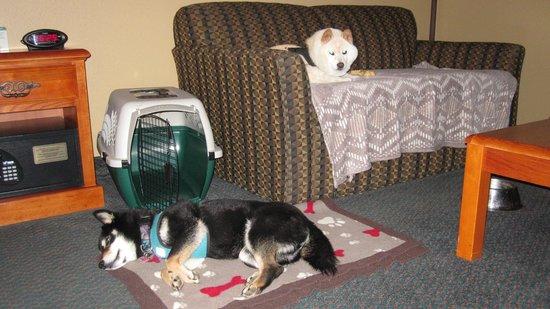 BEST WESTERN PLUS Columbia River Inn: Sleep time