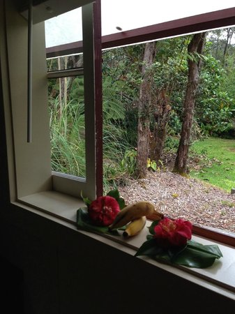 Hale Ohia Cottages: View from kitchen window to back yard