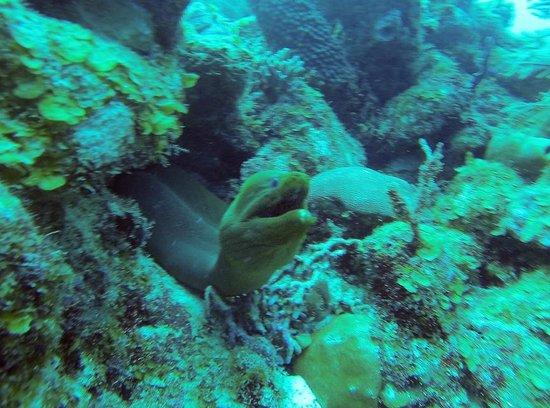 Turneffe Reef: Morey Eel, Aquarium dive site, Long Caye