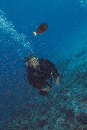 The Scuba Shack: Diving at Molokini