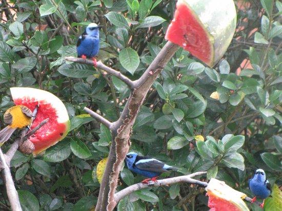 Hotel El Silencio del Campo: Birds feeding across from dining room