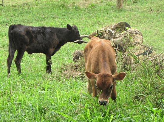 Hotel El Silencio del Campo: Farm on property that you can help with