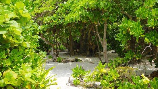 Robinson Club Maldives: The inside of the beautiful picnic island Devaamagalla