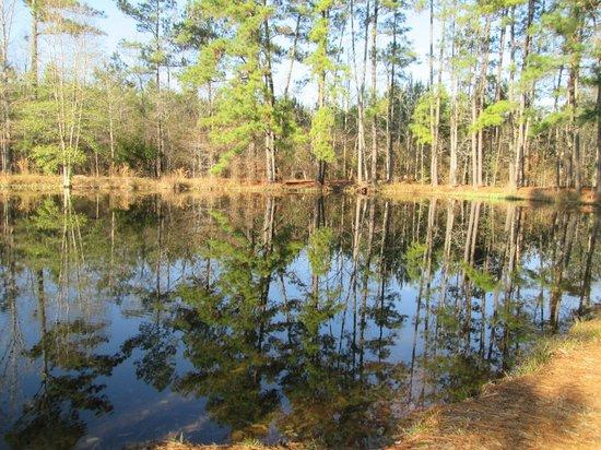 Tchefuncte Campground : Pond