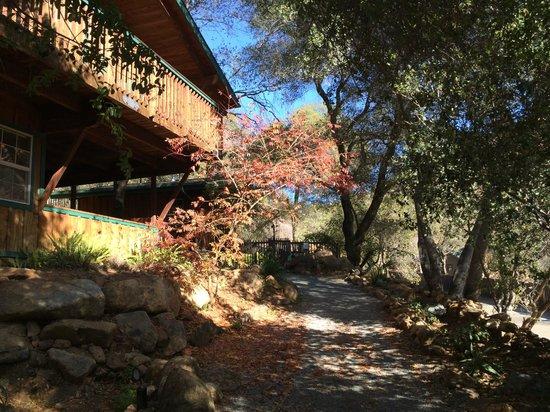 Buckeye Tree Lodge: Walk up to Hummingbird