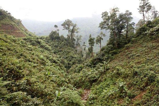 Hoi An Motorbike Adventures: Dense jungles
