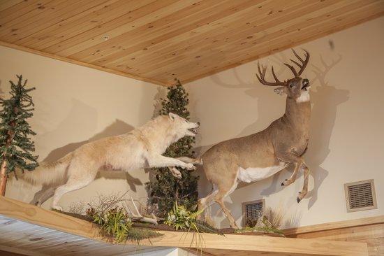 Smoke Hole Caverns & Log Cabin Resort : Arctic Wolf and Saskatchewan Whitetail in Gift Shop