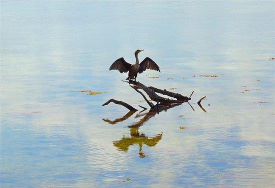Florida Keys Wild Bird Rehabilitation Center : Some wildlife entertainment!