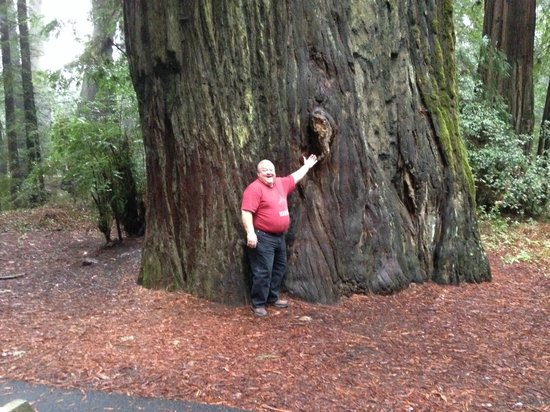 Avenue of the Giants: Comparison of size of human to tree!