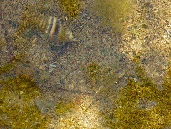 Florida Keys Wild Bird Rehabilitation Center : fish, snails oh my!