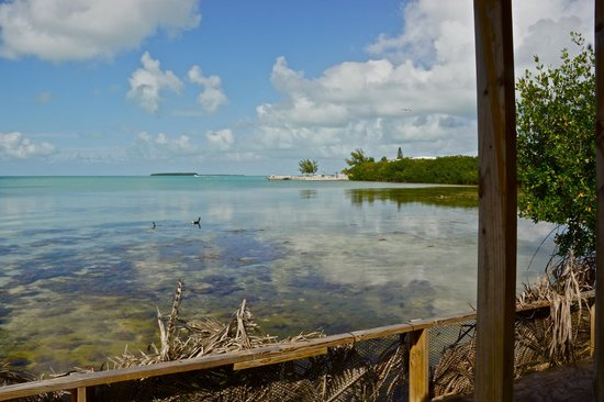 Florida Keys Wild Bird Rehabilitation Center : more birds & water so clear you can see the fish!