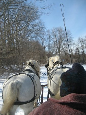 Allegra Farm And The Horsedrawn Carriage And Sleigh Museum Of New England張圖片