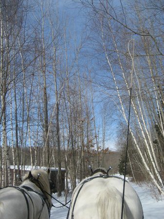 Allegra Farm And The Horsedrawn Carriage And Sleigh Museum Of New England: Birch trees