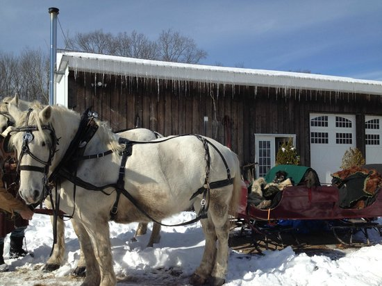 Allegra Farm And The Horsedrawn Carriage And Sleigh Museum Of New England: Our sleigh awaits
