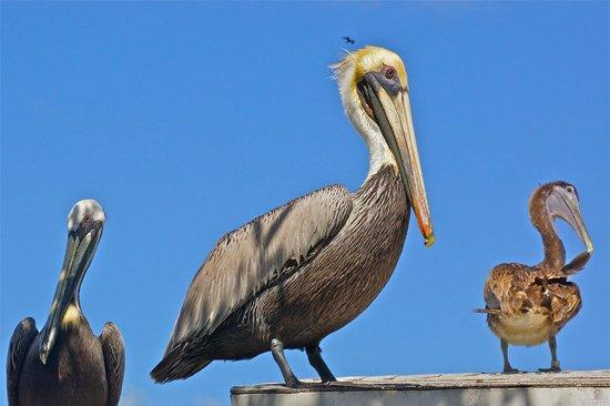 Florida Keys Wild Bird Rehabilitation Center : so neat!