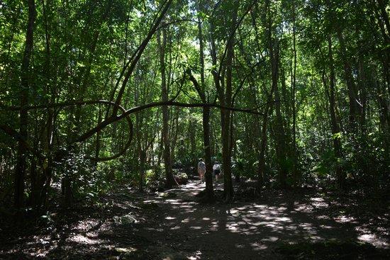 Muyil : pretty jungle...