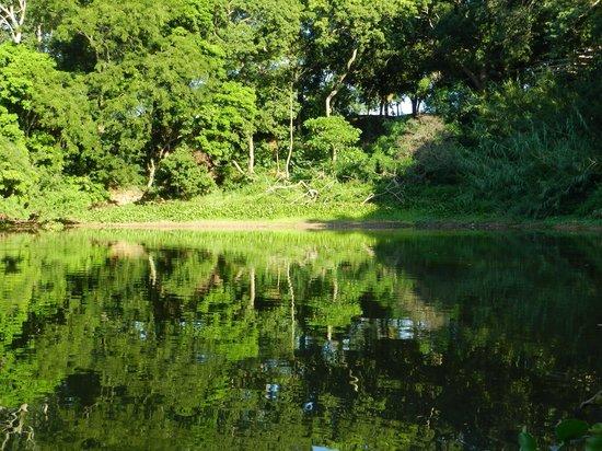 Jardin Botanico Santa Cruz: Laguna dentro del Jardín Botánico
