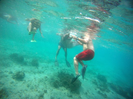 West Bay Tours - Private Tours : **Forgot to say snorkel gear provided for nominal  fee-$8pp when we were there**