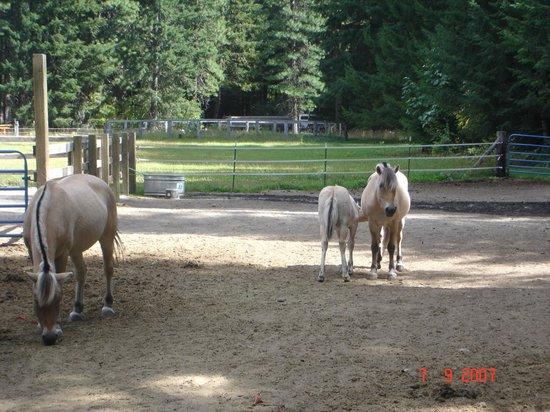 Stehekin Valley Ranch: horses