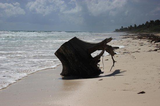 Sian Ka'an Biosphere Reserve : beach area in Sian Kaan