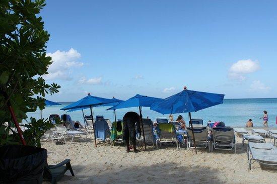 Comfort Suites Seven Mile Beach: small beach area