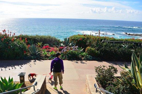Laguna Beach: scenery