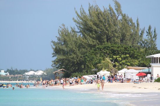 Comfort Suites Seven Mile Beach: crowded by royal palms with cruise pasangers