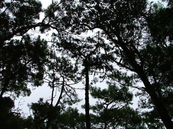 Museo Archivo Historico Municipal : El bosque