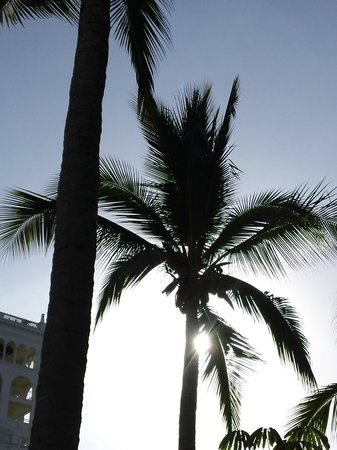 Hotel Riu Palace Pacifico: view from the pool