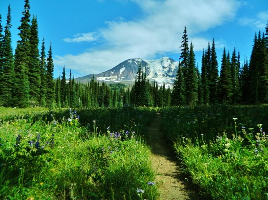 Gifford Pinchot National Forest: Divide Meadow, Mt. Adams Wilderness