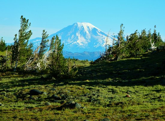 Gifford Pinchot National Forest: Mt. Rainier from Mt. Adams