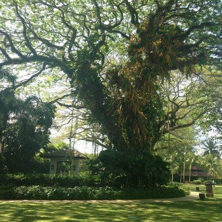 Shangri-La's Rasa Sayang Resort & Spa: Beautifully landscaped grounds