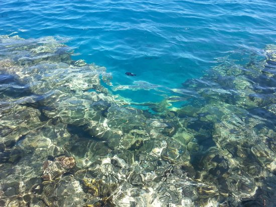 Fare Vaihere: Snorkeling dal pontile