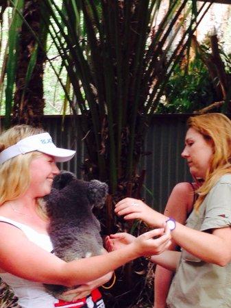 Bungalow Bay Koala Village: Koala kindness