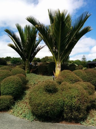 Auckland Botanic Gardens: Palms and clipped hedging