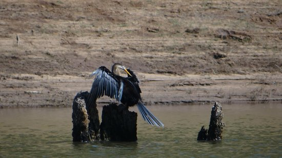 Periyar Tiger Reserve : Up close with the birds on the lake...clicked from bamboo raft