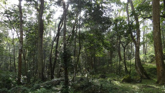 Periyar Tiger Reserve : The thick jungle