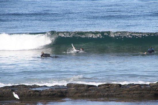 Hotel Gala: Surfere på stranda.