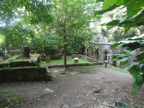 Anse Couleuvre: ruine de l'habitation