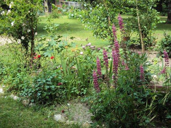 Les Gunnéras : le jardin