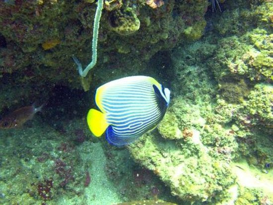 Scuba Froggy Kuta : Diving Kuta Lombok