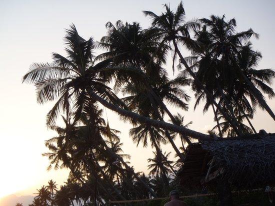 Ganesh Garden Beach Cabanas : Palms at  sunset