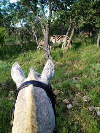 Ant's Hill & Ant's Nest: bunzi and the pyama donkeys