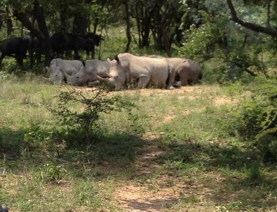 Ant's Hill & Ant's Nest : the rhinos and the wildebeest