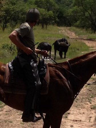 """Ant's Hill & Ant's Nest : during a canter we """"ran"""" into two buffalos"""
