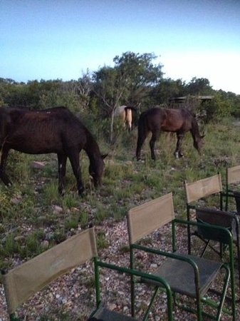 Ant's Hill & Ant's Nest: the horses at sundowners