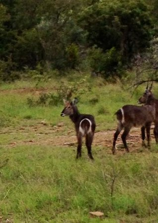 Ant's Hill & Ant's Nest : some waterbuck